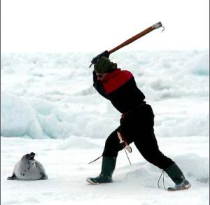 sealslaughter