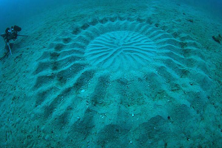 Yoji-Ookata-Deep-Sea-Mystery-Circle-1